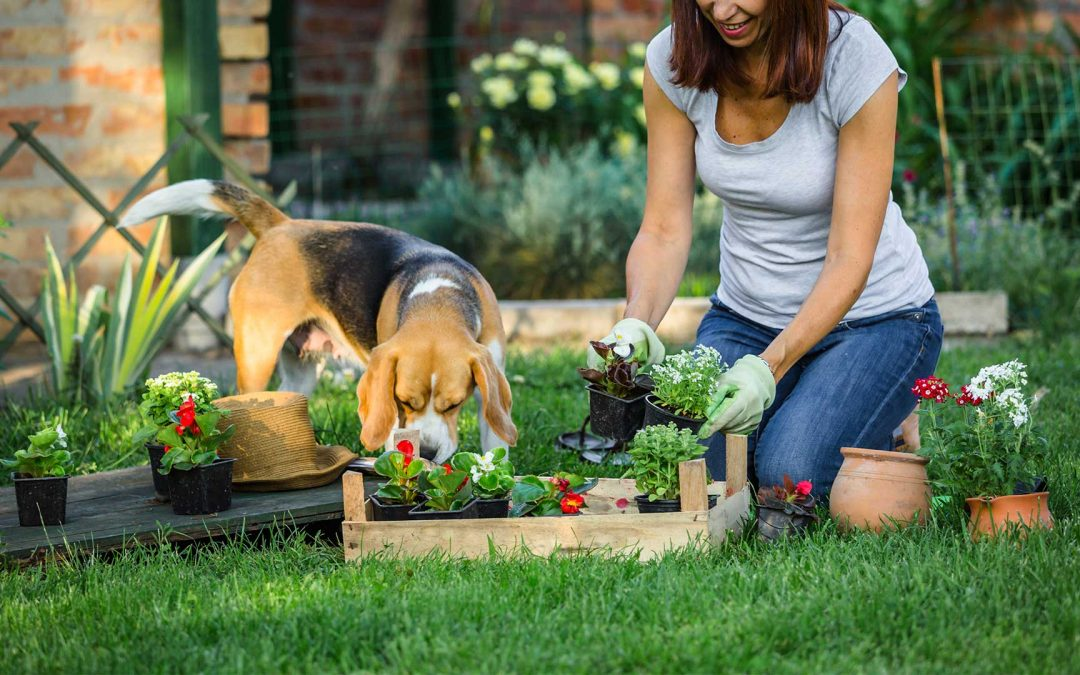 Pet Friendly Garden Checklist