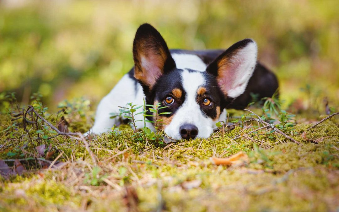 So your pet has fleas, now what?