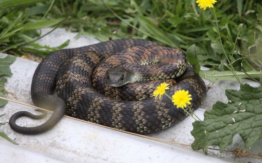 Snakes are Now Active!